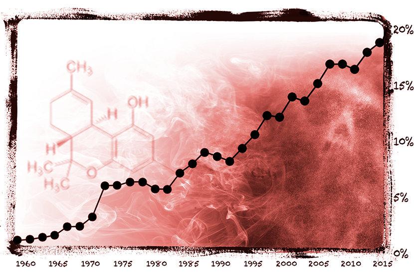ככל שיש יותר THC בצמח, כך הוא יותר פסיכואקטיבי וכך הפוטנציאל גבוה יותר להשתמש בו, להתמכר לו, והשפעות מזיקות אחרות.