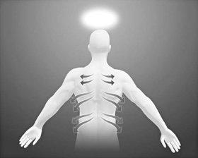 Passe os dedos pelos canais nervosos que partem da coluna vertebral, até à parte frontal do corpo.