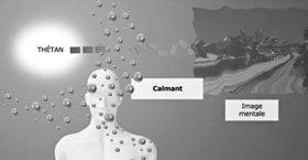 Les médicaments antidouleur inhibent l'aptitude du thétan à créer des images mentales.