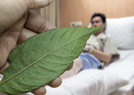 A hand is holding the kratom leave in front of the hospital patient.