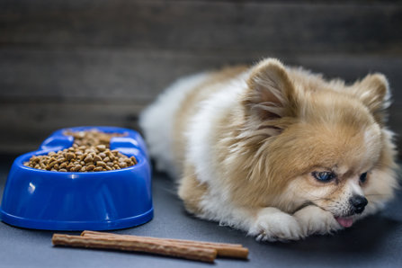 dogs in danger from tainted food