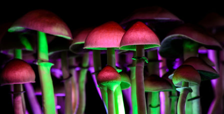 decriminalizing mushrooms