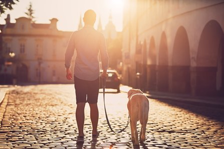 Man walking the dog on a sunny street