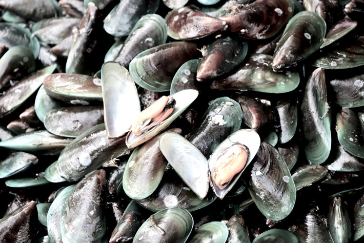 Mussels with opioids
