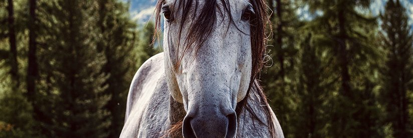 How Bigotry & Wild Horses Can Both Get Someone Hurt